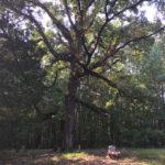 Burrow Hanging Tree